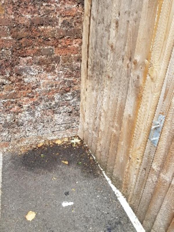 deep clean car park, there is urine stench next to my garden-20 Worland Road, London, E15 4EY