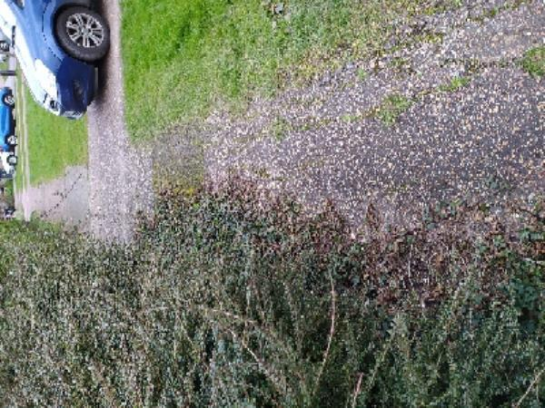 Footpath is becoming inaccessible due to overgrown vegetation, brambles and weeds, the pavement is also uneven and all in all it will be difficult for those with mobility problems to use it. the brambles are at eye height of young children. -6 Weald Close, Hurstpierpoint, BN6 9SR