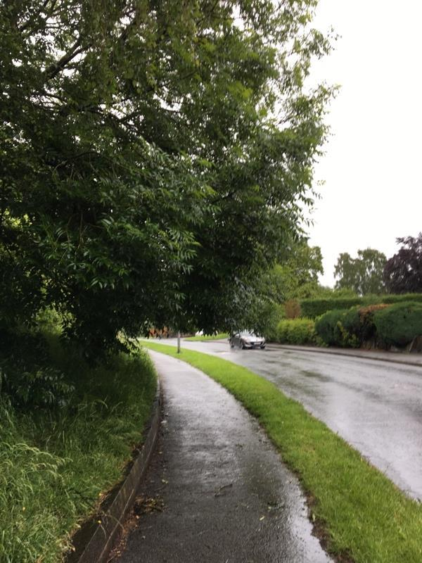 Shrubs and trees blocking the path.  -Egerton Drive, Upton, Chester CH2 1BT, UK
